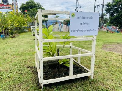 ทางองค์การบริหารส่วนตำบลลุโบะบือซา ได้อนุรักษ์พันธ์พืชประจำตำบล